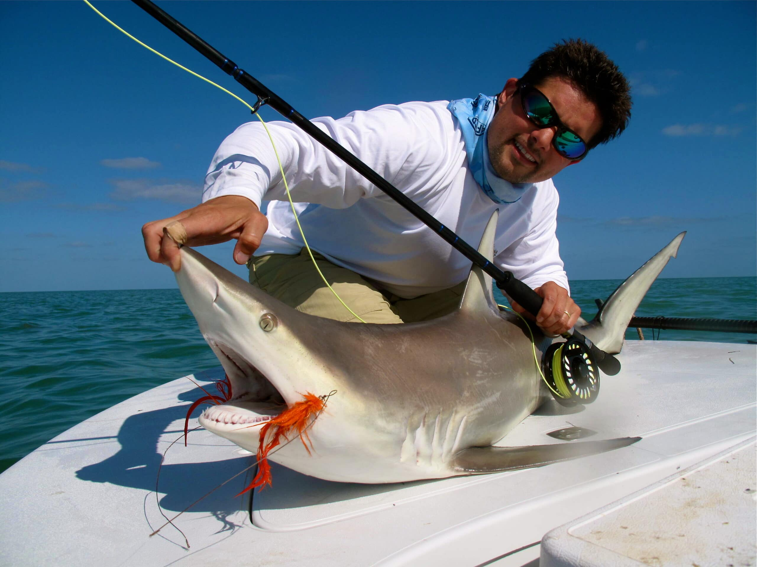 1000 images about sporting ii on pinterest great white for Shark fishing in florida