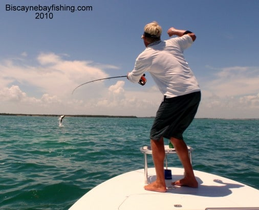 Biscayne Bay Tarpon Fishing