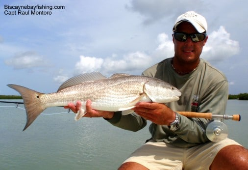Flamingo Redfish