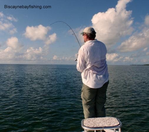 Biscayne Bay Permit