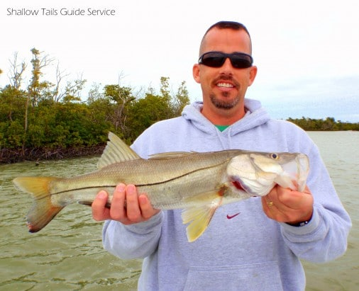 Flamingo Everglades Snook