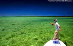 Biscayne Bay Fly Fishing