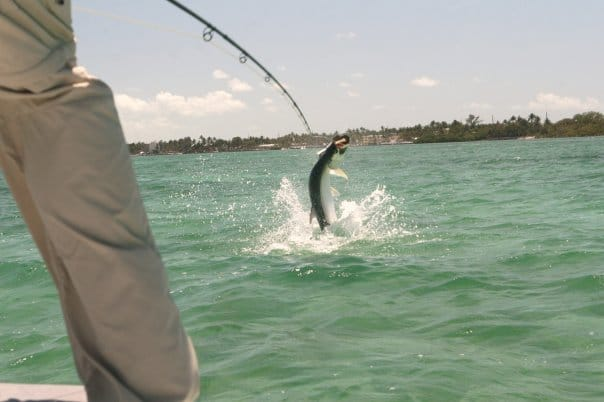 Florida Keys & Biscayne Bay Fishing: Tarpon Worm Hatch & Phenomenal Bonefishing