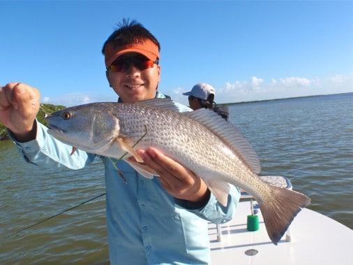 Florida Everglades Redfish