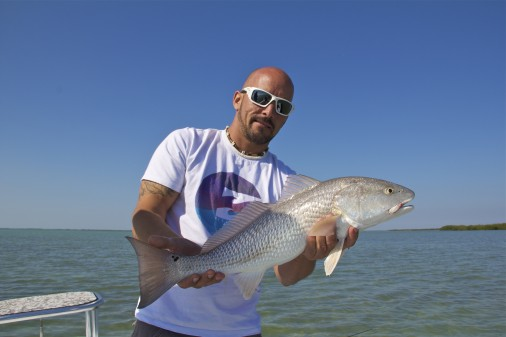 Flamingo Everglades Redfish