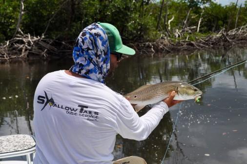 Fly Fishing Everglades Redfish