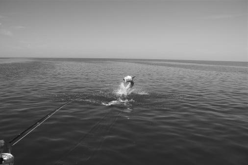 Fly Fishing For Tarpon