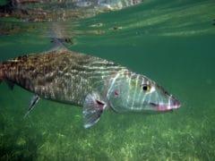 Florida Keys Bonefish Fishing