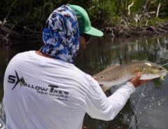 Redfish in Flamingo Everglades