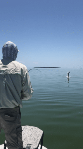 Tarpon fishing 2018