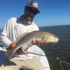 Everglades Red Fish