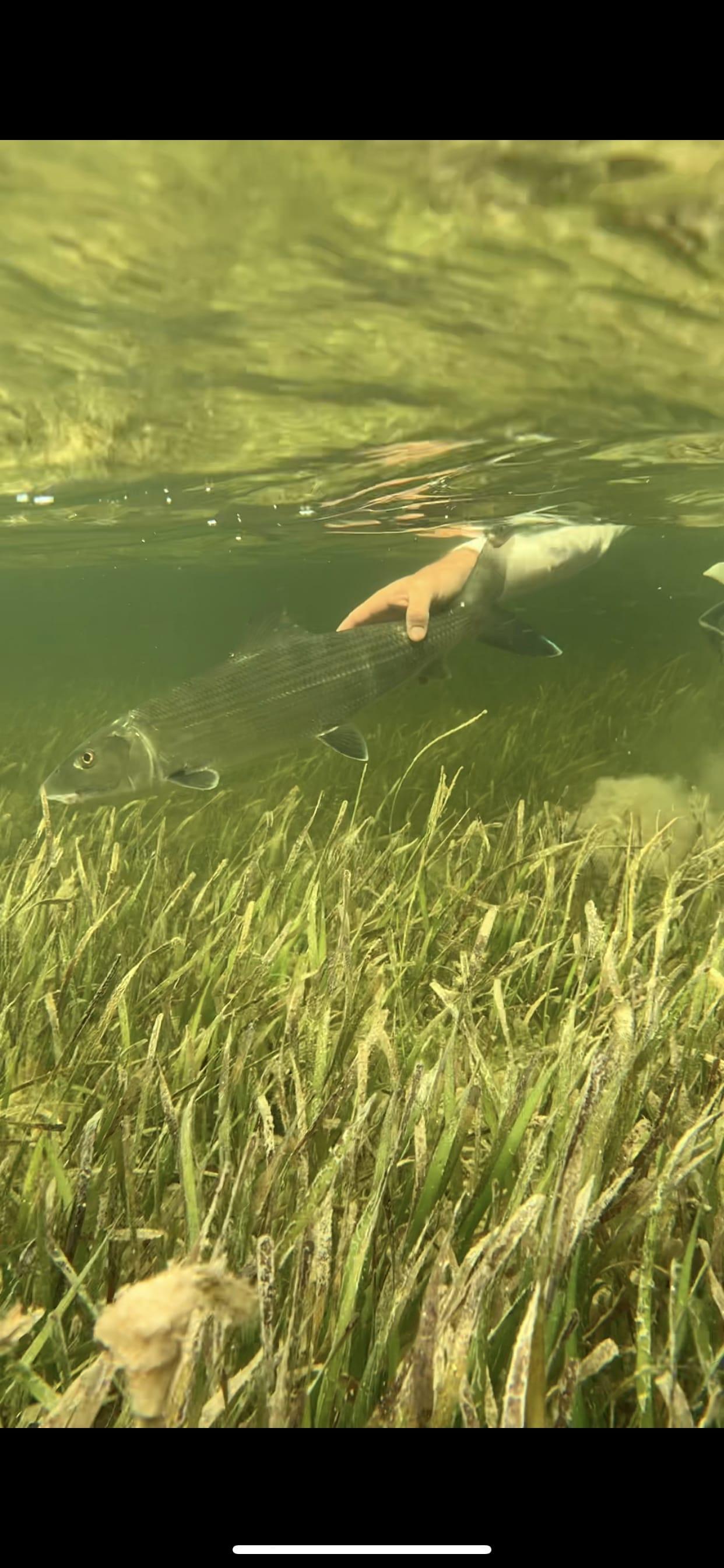 Bone fish release