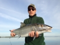 12 pound December Bonefish