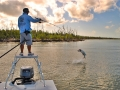 Everglades Taropn